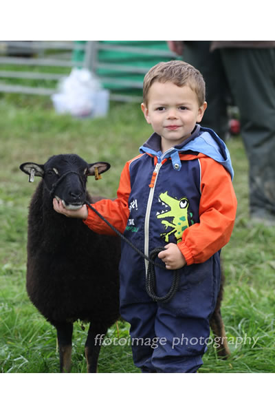 Llandysul Show 2015 -sheep and child