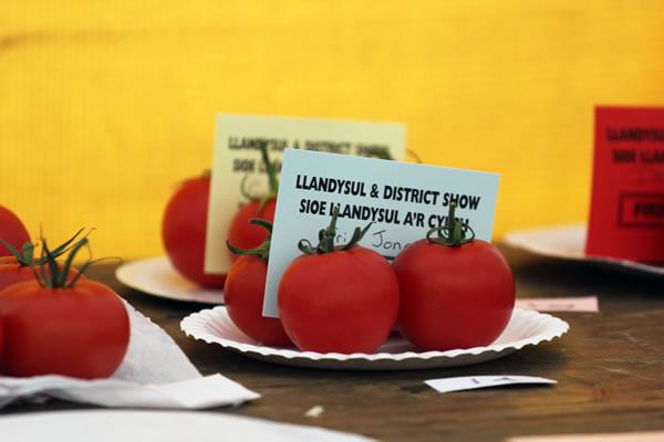Sioe Llandysul 2017 - winning tomatoes
