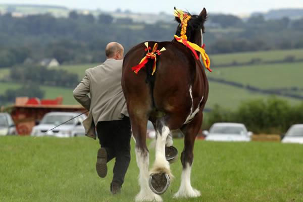 Sioe Llandysul 2017 - beautiful horse