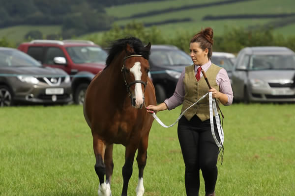 Sioe Llandysul 2017 - handler and horse